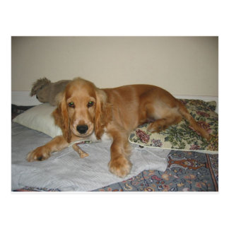 rotes Cocker spaniel puppy.png Postkarte