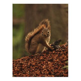 Rotes Eichhörnchen auf Rückstand-Stapel Postkarten