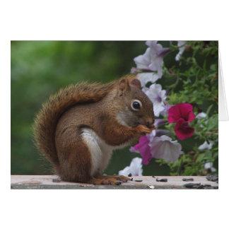 Rotes Eichhörnchen, das an Sie denkt Karte