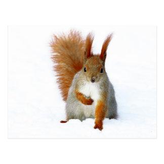 Rotes Eichhörnchen, das auf Schnee sitzt Postkarten