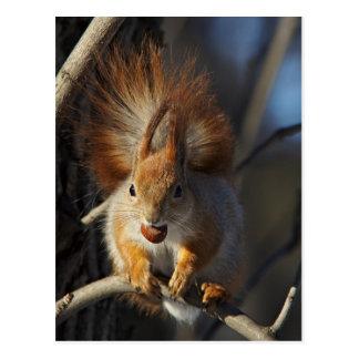 Rotes Eichhörnchen mit einer Haselnuss Postkarten