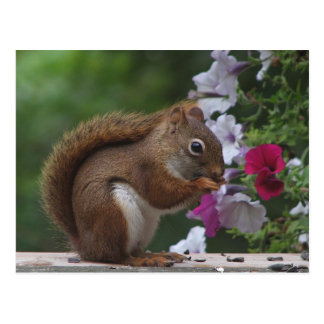 Rotes Eichhörnchen mit Petunien Postkarte