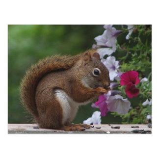 Rotes Eichhörnchen mit Petunien Postkarten
