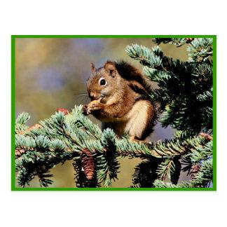 Rotes Eichhörnchen Postkarte