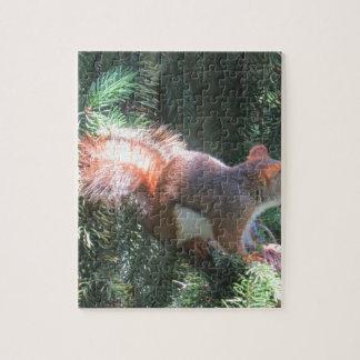 Rotes Eichhörnchen Puzzle