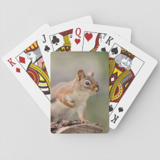 Rotes Eichhörnchen Spielkarten