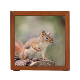 Rotes Eichhörnchen Stifthalter