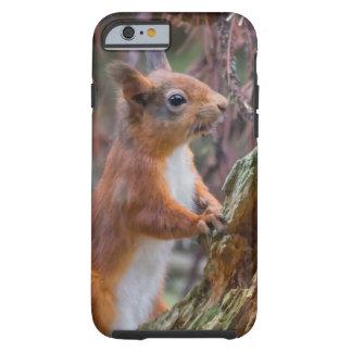 Rotes Eichhörnchen Tough iPhone 6 Hülle