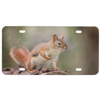 Rotes Eichhörnchen US Nummernschild