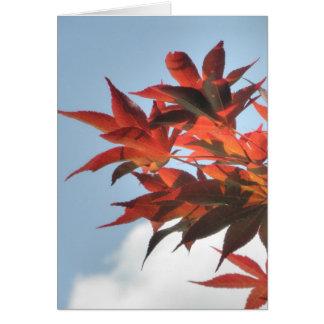 Rotes japanischer Ahorn-Baum-Baum-Blätter-Foto Karte