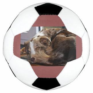 rotes merle Australierschlafen 2 Fußball