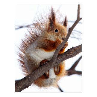 Rotes Pelzeichhörnchen mit einer Haselnuss Postkarten