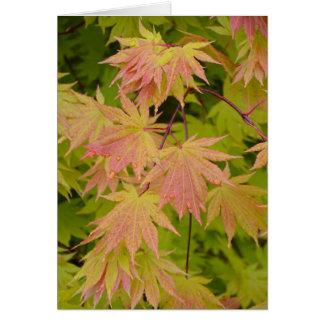 Rotes und grünes Blätter des japanischen Ahorns Karte