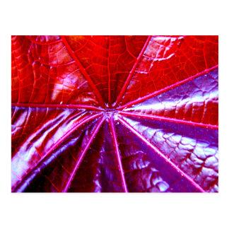 Rotes und lila tropisches Gießmaschinen-Blatt Postkarte