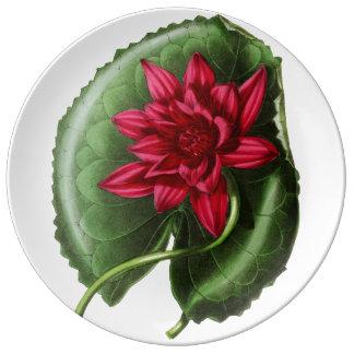 Rotes Wasser-Lilie Teller