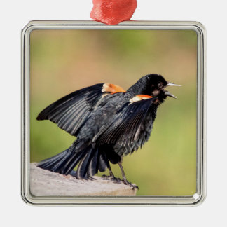 Rotgeflügelte singende Amsel Silbernes Ornament