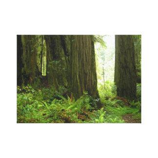 Rotholz-Baum-WaldLeinwand-Druck Leinwanddruck