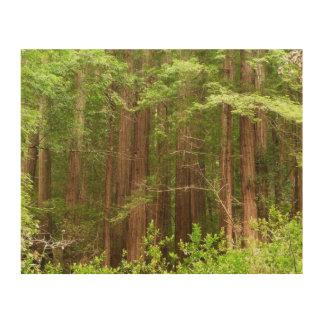Rotholz-Bäume am Muir Holz-nationalen Monument Holzwanddeko