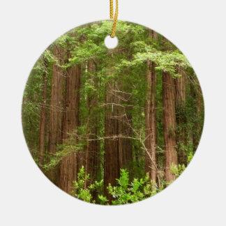 Rotholz-Bäume am Muir Holz-nationalen Monument Keramik Ornament