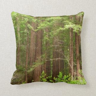 Rotholz-Bäume am Muir Holz-nationalen Monument Kissen