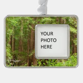Rotholz-Bäume am Muir Holz-nationalen Monument Rahmen-Ornament Silber