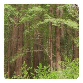 Rotholz-Bäume am Muir Holz-nationalen Monument Töpfeuntersetzer