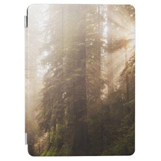 Rotholz-Bäume im Morgen-Nebel mit Sunrays iPad Air Cover