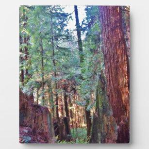 Rotholz-Reihe #2: Durch die Bäume Fotoplatte