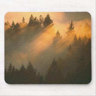 Rotholzbäume im Küstennebel, Marin County, Mousepads
