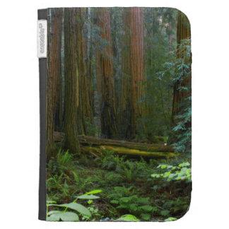 Rothölzer im Muir Holz-Nationalpark