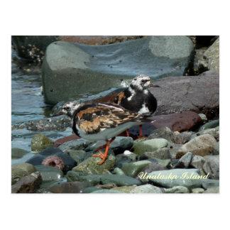 Rötlicher Turnstone-Flussuferläufer Postkarte