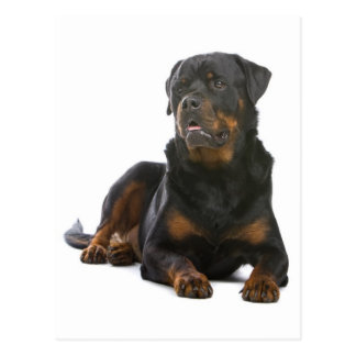 Rottweiler Hündchen-Raum-Postkarte Postkarten