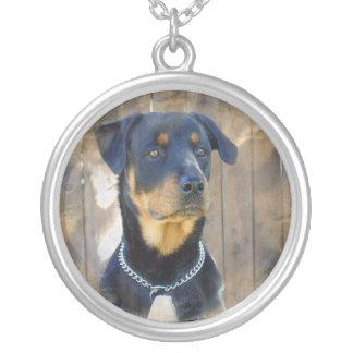Rottweiler Hundehalskette Versilberte Kette