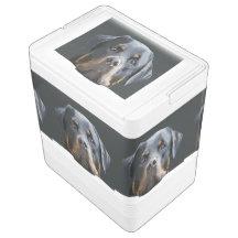 Rottweiler Porträt-Vektor Igloo Kühlbox