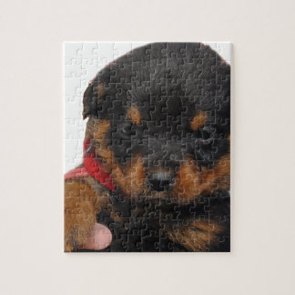 Rottweiler Welpen-Rot Puzzle