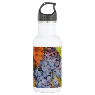 Rotwein-Trauben auf der Rebe Edelstahlflasche