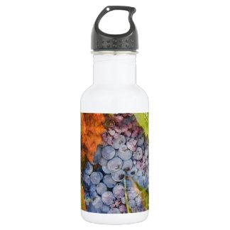 Rotwein-Trauben auf Rebe Trinkflasche