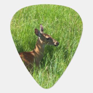 Rotwild, die im Gras-Plektrum sitzen Plektrum