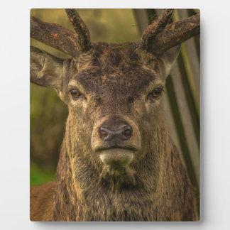 Rotwild-Geweih-Wald Fotoplatte