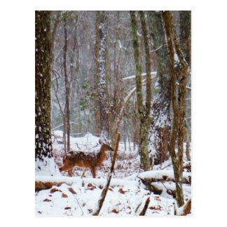 Rotwild im Schneefall Postkarte