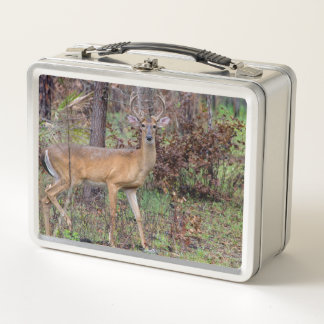 Rotwild Metall Lunch Box