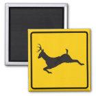 Rotwild-Überfahrt-Landstraßen-Zeichen Quadratischer Magnet