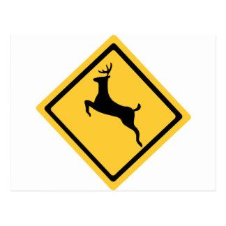 Rotwild-Überfahrt-Symbol Postkarte
