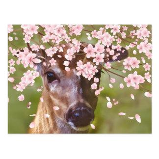 Rotwild unter Kirschbaum Postkarten