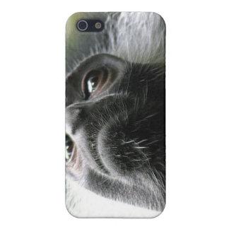Ruandacolobus-Affe iPhone Fall Etui Fürs iPhone 5