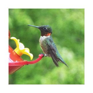 Rubin-Throated Kolibri-Vogel-Fotografie Leinwanddruck