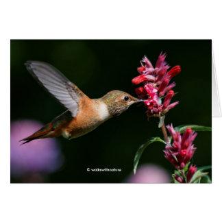 Rufous Kolibri, der auf dem Anis-Ysop füttert Karte