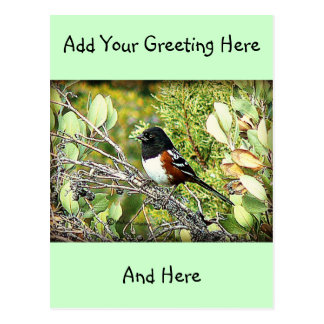 Rufous mit Seiten versehener Towhee-Spatz Postkarte