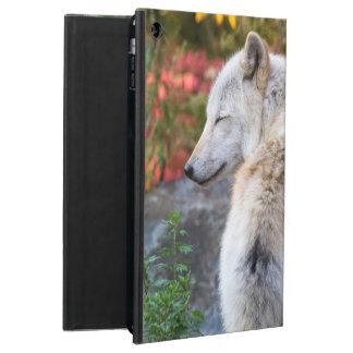 Ruhiger Herbst-Wolf
