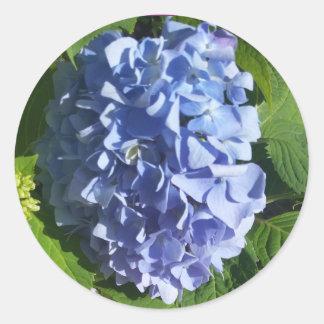 Runder Aufkleber des blauen Hydrangea,